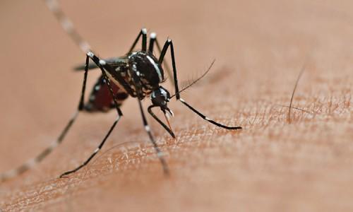 zikavirusmosquito-500x300_c